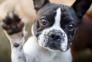 Cute dog holding its paw in the air.